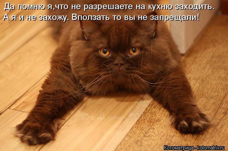 Котоматрица: Да помню я,что не разрешаете на кухню заходить. А я и не захожу. Вползать то вы не запрещали!