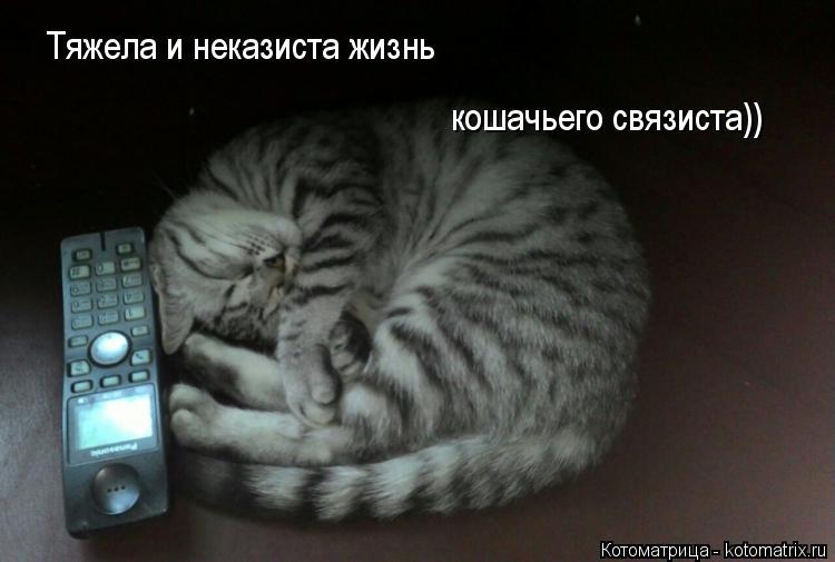 Котоматрица: Тяжела и неказиста жизнь кошачьего связиста))