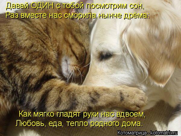 Котоматрица: Давай ОДИН с тобой посмотрим сон, Раз вместе нас сморила нынче дрёма: Как мягко гладят руки нас вдвоем, Любовь, еда, тепло родного дома.