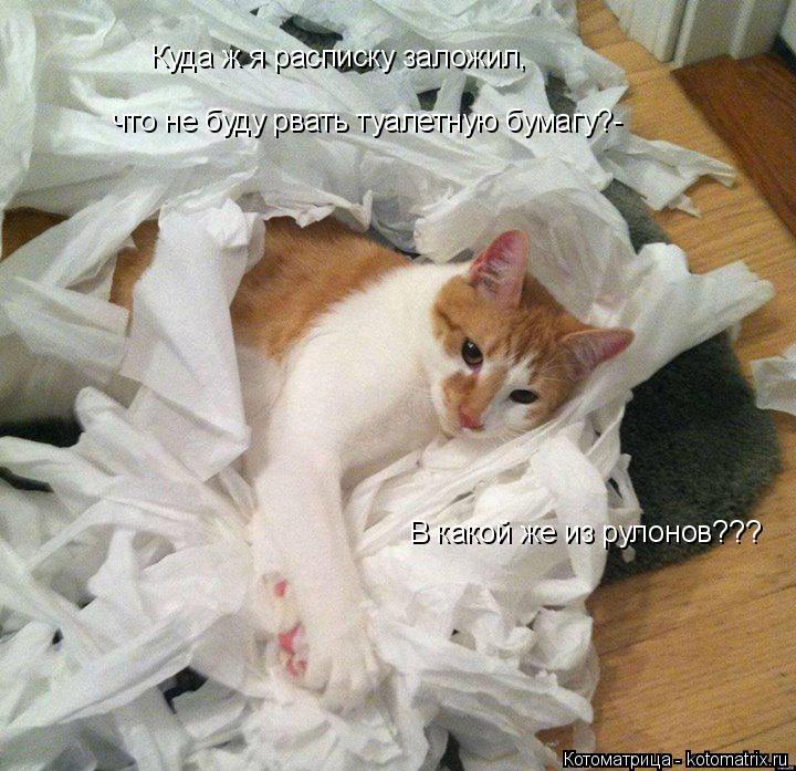 Котоматрица: В какой же из рулонов??? Куда ж я расписку заложил, что не буду рвать туалетную бумагу?-