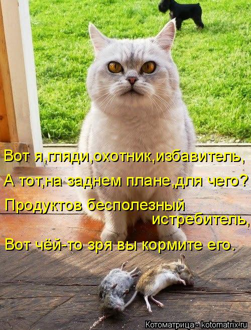 Котоматрица: Вот я,гляди,охотник,избавитель, А тот,на заднем плане,для чего? Продуктов бесполезный  истребитель, Вот чёй-то зря вы кормите его.
