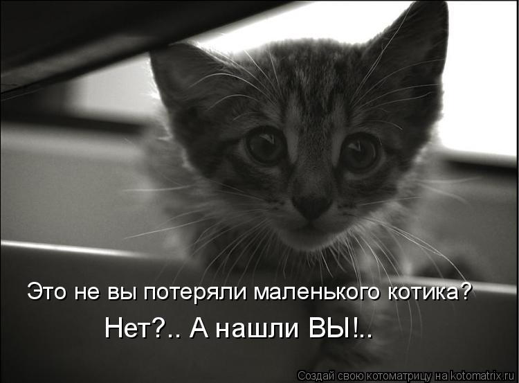 Котоматрица: Это не вы потеряли маленького котика? Нет?.. А нашли ВЫ!..