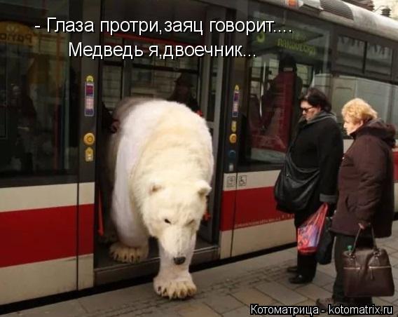 Котоматрица: - Глаза протри,заяц говорит.... Медведь я,двоечник...