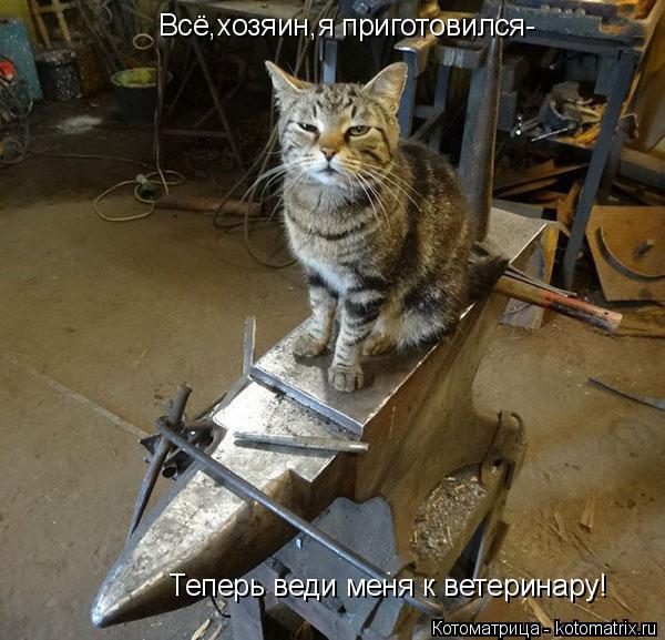 Котоматрица: Всё,хозяин,я приготовился- Теперь веди меня к ветеринару!