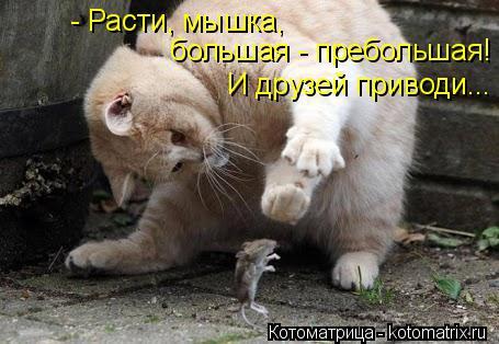 Котоматрица: - Расти, мышка,  большая - пребольшая! И друзей приводи...