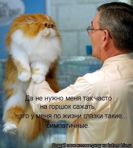 Котоматрица: Да не нужно меня так часто  на горшок сажать, это у меня по жизни глазки такие... симпатичные.