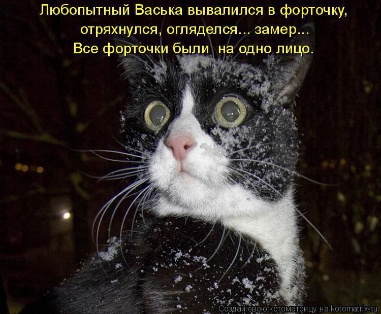 Котоматрица: Любопытный Васька вывалился в форточку, отряхнулся, огляделся... замер... Все форточки были  на одно лицо.