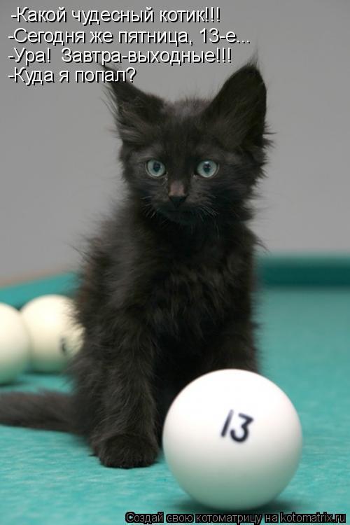 Котоматрица: -Какой чудесный котик!!! -Сегодня же пятница, 13-е... -Ура!  Завтра-выходные!!! -Куда я попал?
