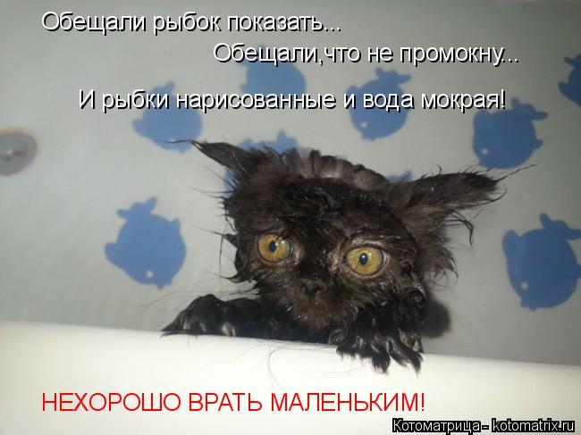Котоматрица: Обещали рыбок показать... Обещали,что не промокну... И рыбки нарисованные и вода мокрая! НЕХОРОШО ВРАТЬ МАЛЕНЬКИМ!