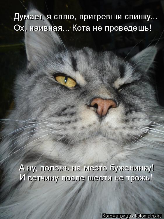 Котоматрица: Думает, я сплю, пригревши спинку... Ох, наивная... Кота не проведешь! А ну, положь на место буженинку! И ветчину после шести не трожь!