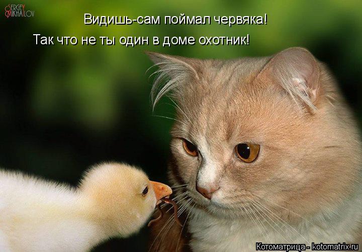 Котоматрица: Видишь-сам поймал червяка! Так что не ты один в доме охотник!