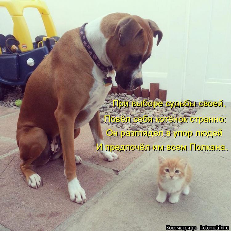 Котоматрица: При выборе судьбы своей, Повёл себя котёнок странно: Он разглядел в упор людей И предпочёл им всем Полкана.