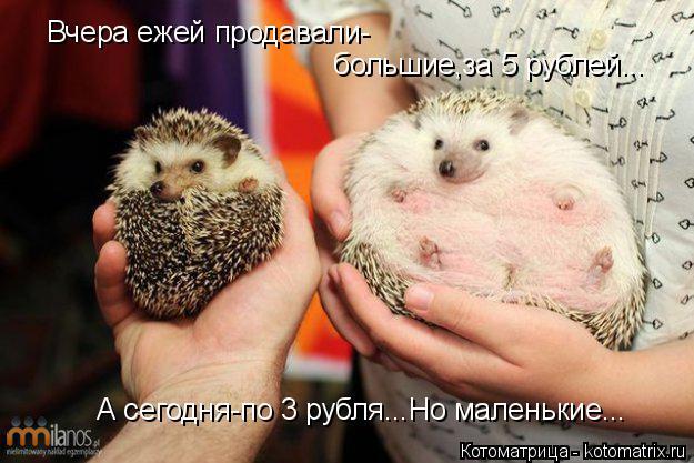 Котоматрица: Вчера ежей продавали- большие,за 5 рублей... А сегодня-по 3 рубля...Но маленькие...
