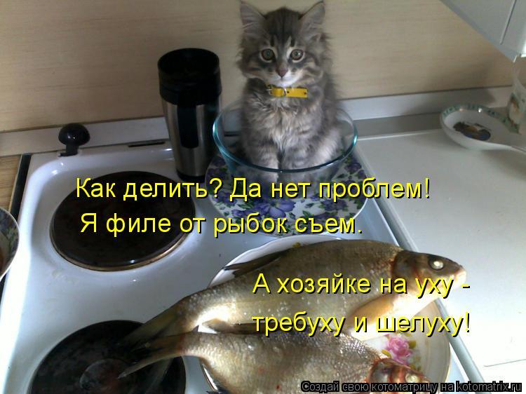 Котоматрица: Как делить? Да нет проблем! Я филе от рыбок съем. А хозяйке на уху -  требуху и шелуху!