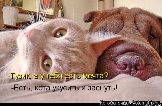 Котоматрица: -Тузик, а у тебя есть мечта? -Есть, кота укусить и заснуть!