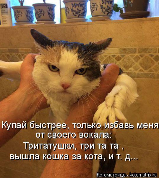 Котоматрица: Купай быстрее, только избавь меня от своего вокала: Тритатушки, три та та , вышла кошка за кота, и т. д...