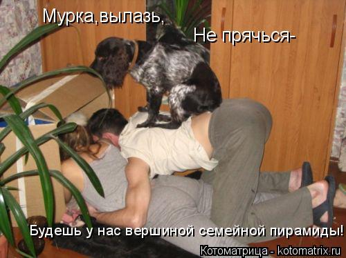 Котоматрица: Мурка,вылазь, Не прячься- Будешь у нас вершиной семейной пирамиды!
