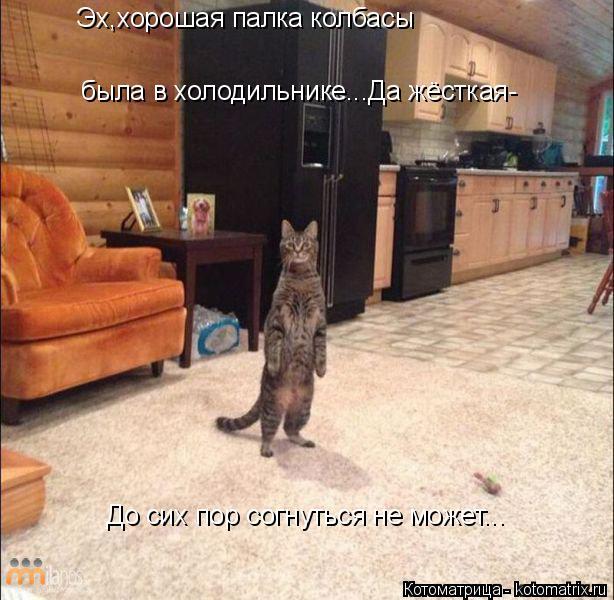 Котоматрица: Эх,хорошая палка колбасы была в холодильнике...Да жёсткая- До сих пор согнуться не может...