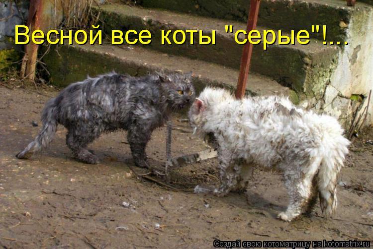 """Котоматрица: Весной все коты """"серые""""!..."""