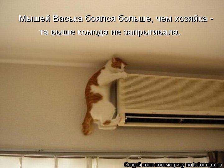 Котоматрица: Мышей Васька боялся больше, чем хозяйка - та выше комода не запрыгивала.