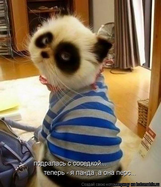 Котоматрица: подралась с соседкой... теперь - я панда ,а она перс...