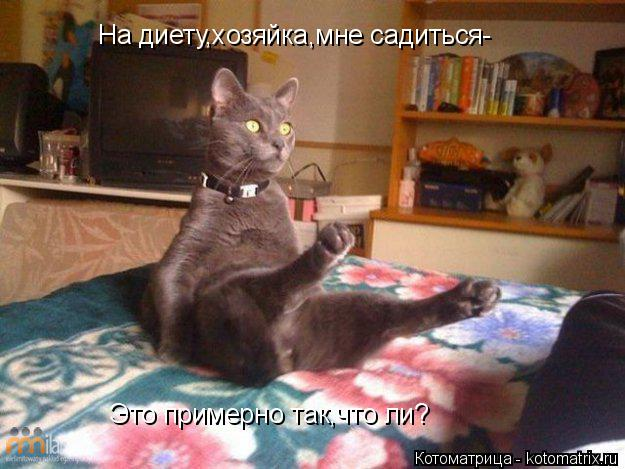 Котоматрица: На диету,хозяйка,мне садиться- Это примерно так,что ли?