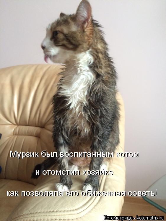 Котоматрица: Мурзик был воспитанным котом и отомстил хозяйке как позволяла его обиженная советь!