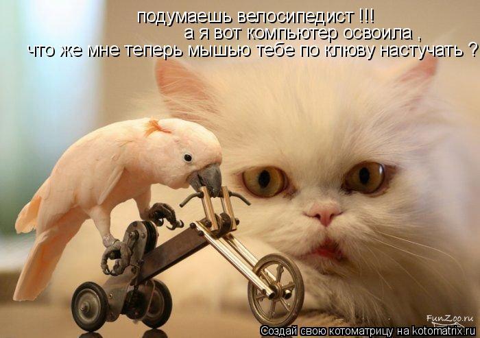 Котоматрица: подумаешь велосипедист !!! а я вот компьютер освоила , что же мне теперь мышью тебе по клюву настучать ?