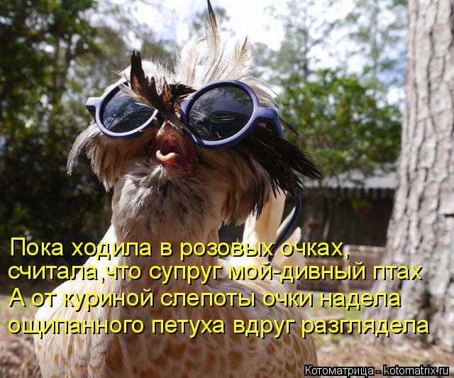 Котоматрица: Пока ходила в розовых очках, считала,что супруг мой-дивный птах А от куриной слепоты очки надела ощипанного петуха вдруг разглядела