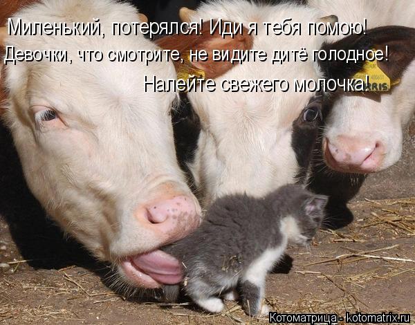 Котоматрица: Миленький, потерялся! Иди я тебя помою! Девочки, что смотрите, не видите дитё голодное! Налейте свежего молочка!