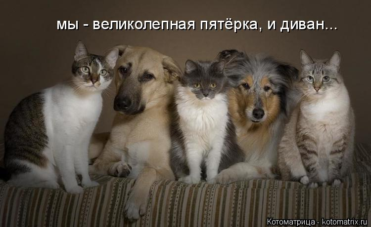 Котоматрица: мы - великолепная пятёрка, и диван...