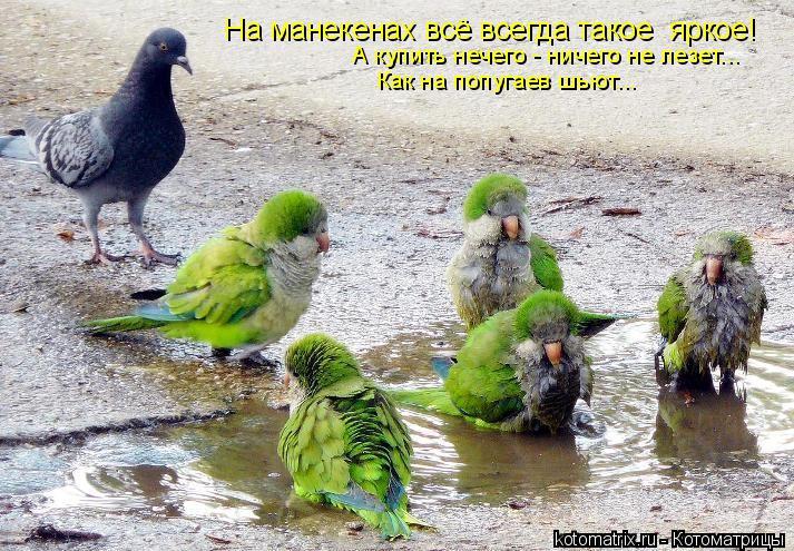 Котоматрица: Как на попугаев шьют... А купить нечего - ничего не лезет... На манекенах всё всегда такое  яркое!