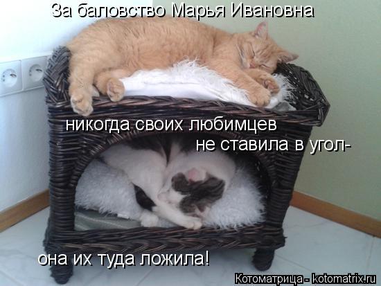 Котоматрица: За баловство Марья Ивановна никогда своих любимцев  не ставила в угол- она их туда ложила!