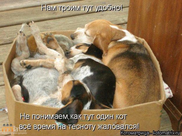 Котоматрица: Нам троим тут удобно! Не понимаем,как тут один кот всё время на тесноту жаловался!