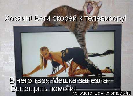 Котоматрица: Хозяин! Беги скорей к телевизору! В него твоя Машка залезла, Вытащить помоги!