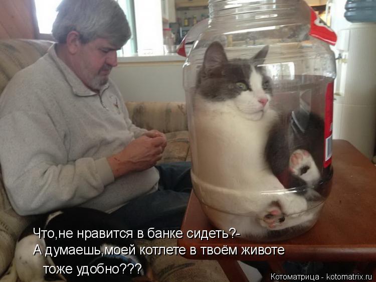 Котоматрица: Что,не нравится в банке сидеть?- А думаешь,моей котлете в твоём животе тоже удобно???