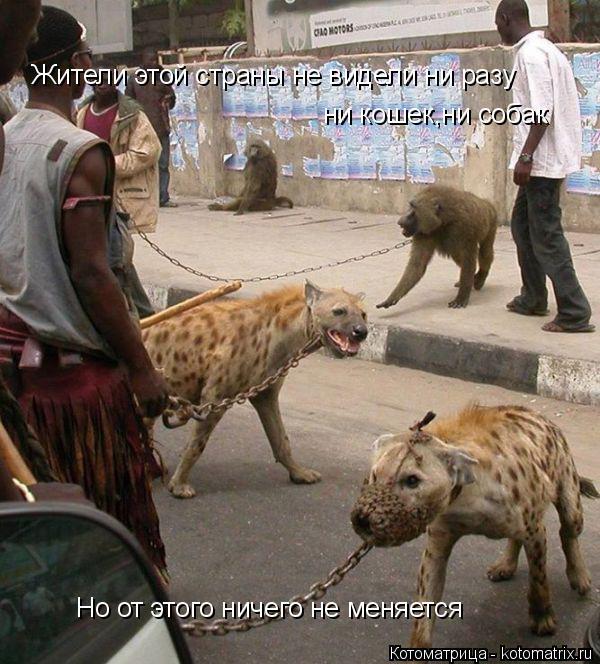 Котоматрица: Жители этой страны не видели ни разу  ни кошек,ни собак Но от этого ничего не меняется