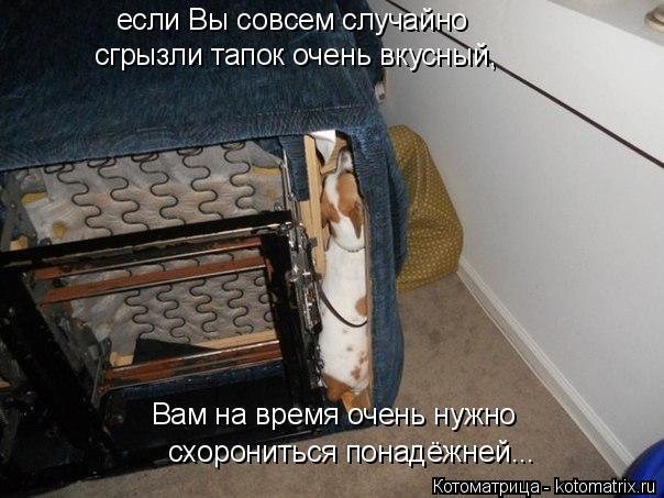 Котоматрица: если Вы совсем случайно  сгрызли тапок очень вкусный, Вам на время очень нужно схорониться понадёжней...