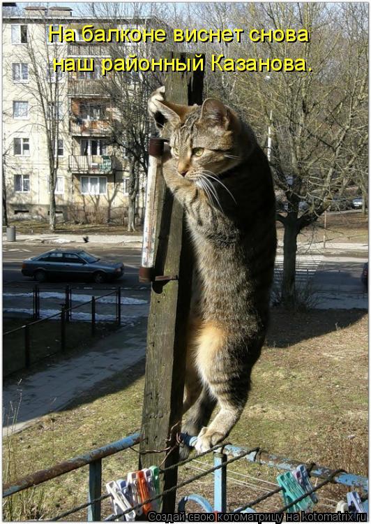 Котоматрица: наш районный Казанова. На балконе виснет снова