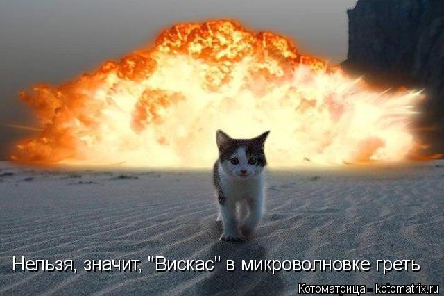 """Котоматрица: Нельзя, значит, """"Вискас"""" в микроволновке греть"""