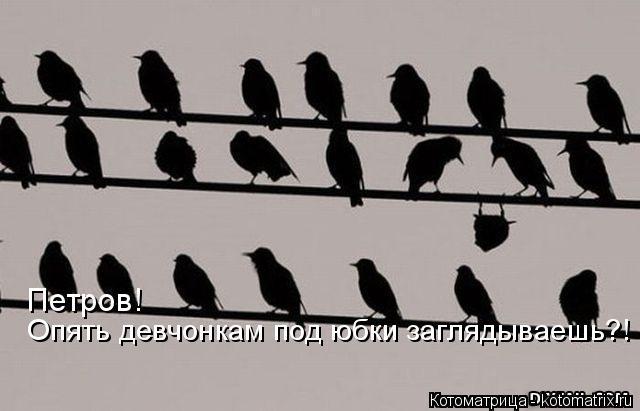 Котоматрица: Петров!  Опять девчонкам под юбки заглядываешь?!