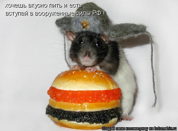 Котоматрица: хочешь вкусно пить и есть , вступай в вооруженные силы РФ !