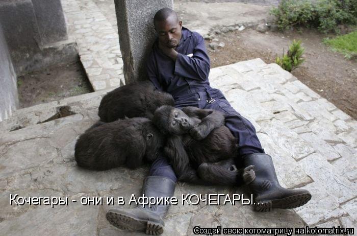 Котоматрица: Кочегары - они и в Африке КОЧЕГАРЫ...