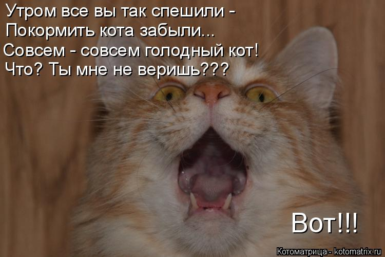 Котоматрица: Утром все вы так спешили -  Покормить кота забыли... Совсем - совсем голодный кот! Что? Ты мне не веришь??? Вот!!!