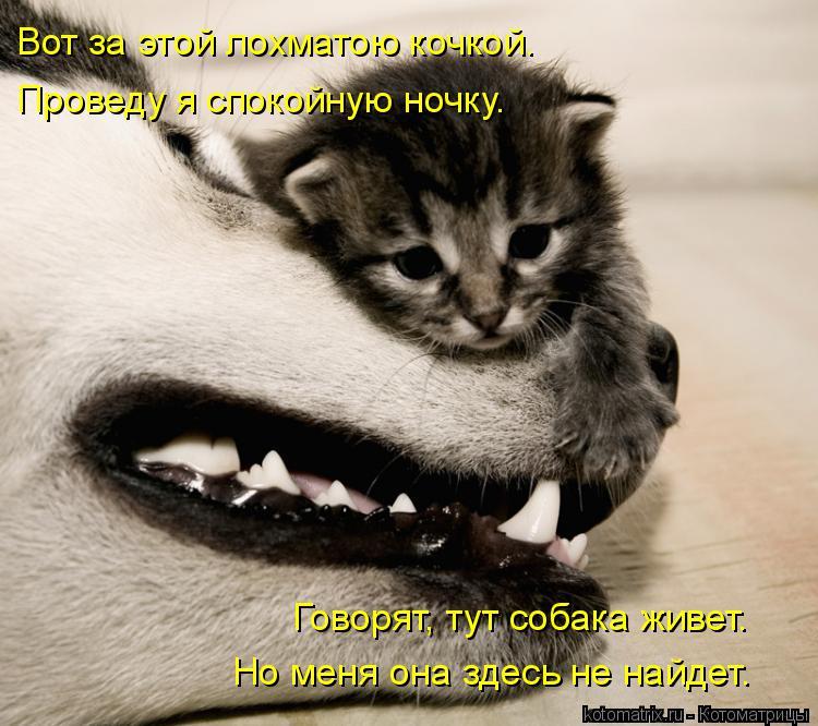 Котоматрица: Вот за этой лохматою кочкой. Проведу я спокойную ночку. Говорят, тут собака живет. Но меня она здесь не найдет.
