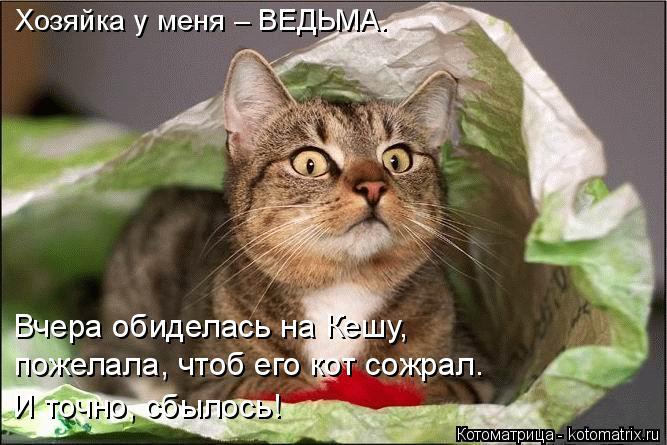 Котоматрица: Хозяйка у меня – ВЕДЬМА. Вчера обиделась на Кешу,  пожелала, чтоб его кот сожрал. И точно, сбылось!