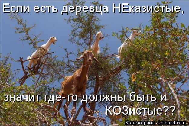 Котоматрица: Если есть деревца НЕказистые, значит где-то должны быть и КОЗистые??