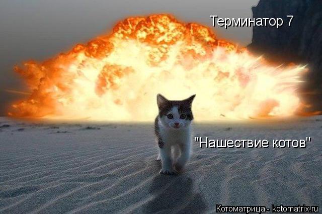 """Котоматрица: Терминатор 7 """"Нашествие котов"""""""