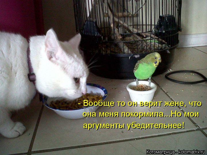Котоматрица: - Вообще то он верит жене, что она меня покормила...Но мои  аргументы убедительнее!