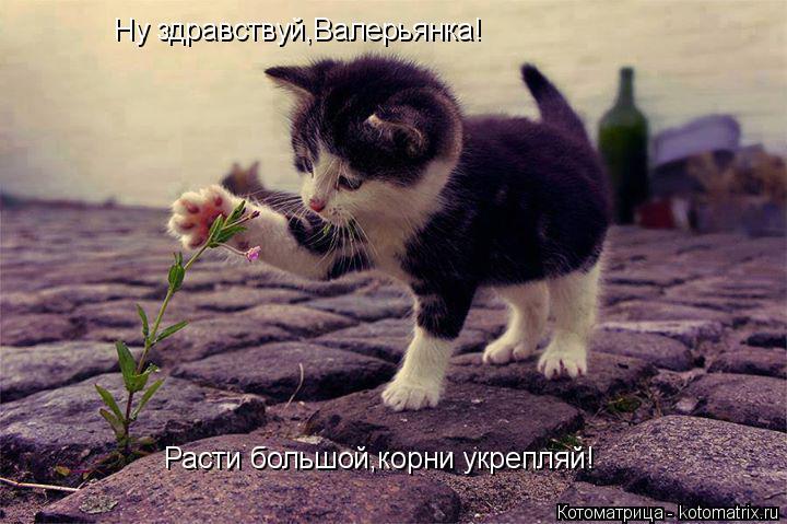 Котоматрица: Ну здравствуй,Валерьянка! Расти большой,корни укрепляй!